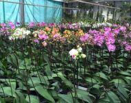 nosorchidees9