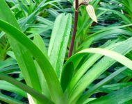 nosorchidees5