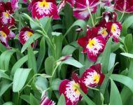 nosorchidees7